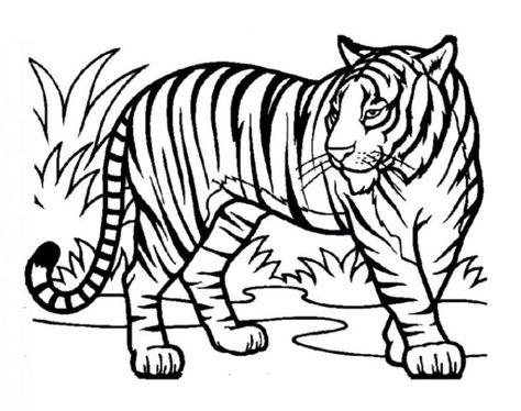 tiger ausmalbilder  Ausmalbilder fr kinder  ausmalbilder
