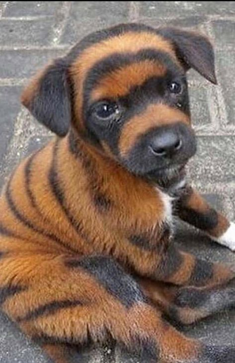 Puppy With Unusual Markings Cute Animals Beautiful Dogs