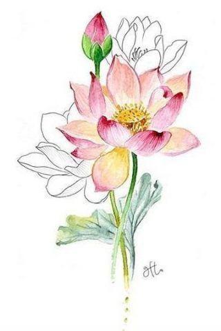 Design Tattoo Flower Roses 29 Ideas Flower Painting Flower Drawing Lotus Painting