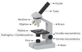 Resultado De Imagen Para El Telescopio Y Sus Partes Faciles De Dibujar Para Ninos Partes Del Microscopio Microscopio Optico Microscopio