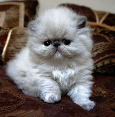 Cats And Kittens Erskine Cats And Kittens Pictures To Color Cats Kittens Beautiful Cats Cute Cats