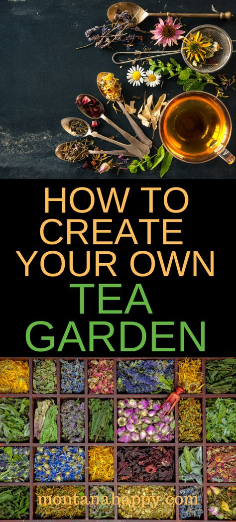 How to Grow Your Own Tea Garden | Montana Happy