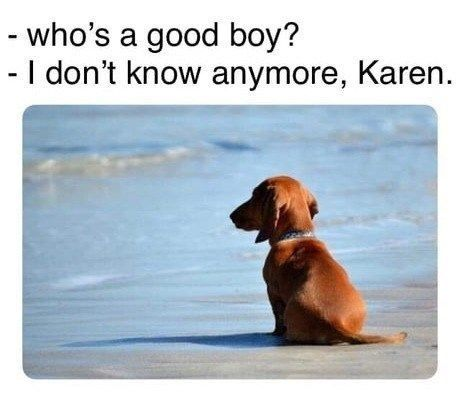 Cats And Dogs Dealing With The Karens In Their Life Memes Funny Animal Memes Animal Memes Karen Memes