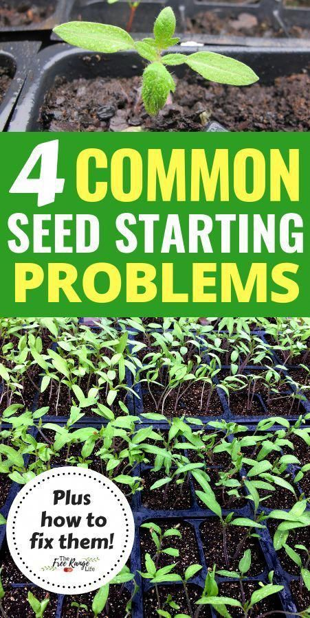The Article For Yourself If You Like Flower Gardening Don T Ignore The Following Article Dont Flower In 2020 Seed Starting Vegetable Garden Planner Gardening Tips