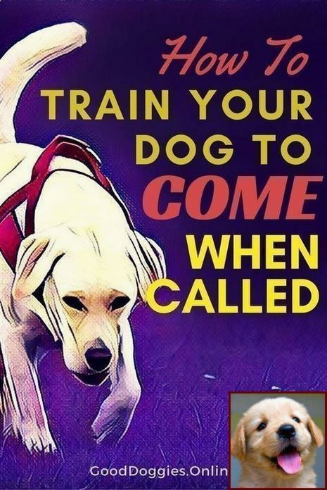 House Training A Puppy In 7 Days And Clicker Training Dogs Guide