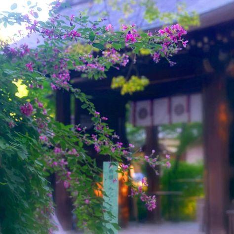 Japan おしゃれまとめの人気アイデア Pinterest Elizabeth Horie