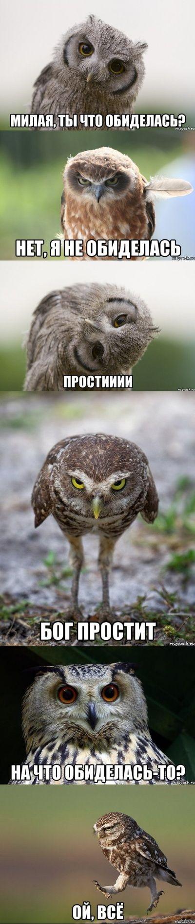 сих ой все картинки приколы сова заботу близких