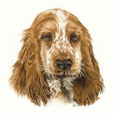 Needle Painting Embroidery - Spaniel, a Hand Embroidery Design as an Alternative to Cross-stitch.