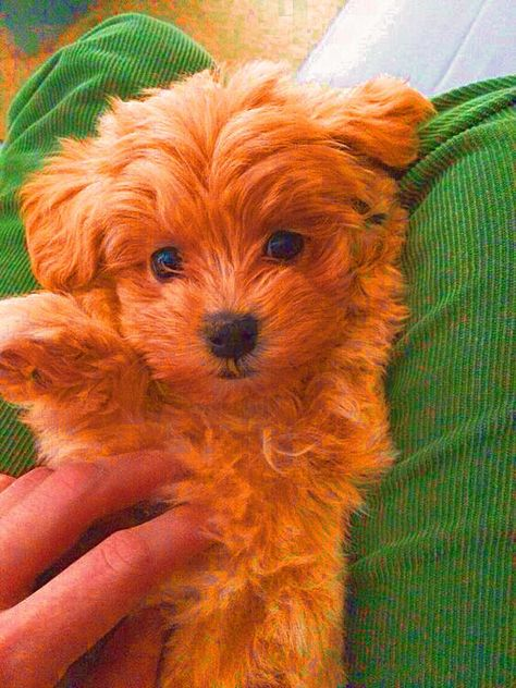 Not my photo edited by me. #dog #puppy #dogsofinstagram #doglovers