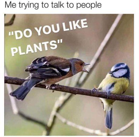 Memes That Make You Lol Irl 9 Page 1 Gardening Memes Animal Jokes Funny Birds
