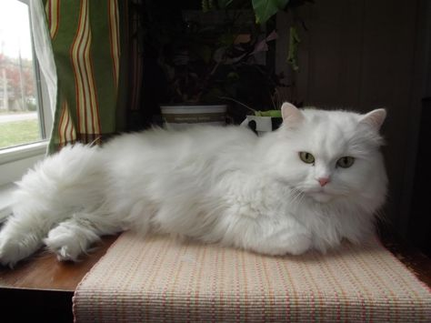 Abby Is Up For Adoption 5 Year Old Female Cat Free To Good Home Vernon Ct Cats Fur Kids Pet Adoption