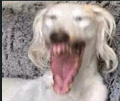 Perro Riendose Asjdjjfdkksks Caras Para Stickers Perros Gracioso