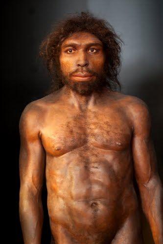 imagen de homo antecessor