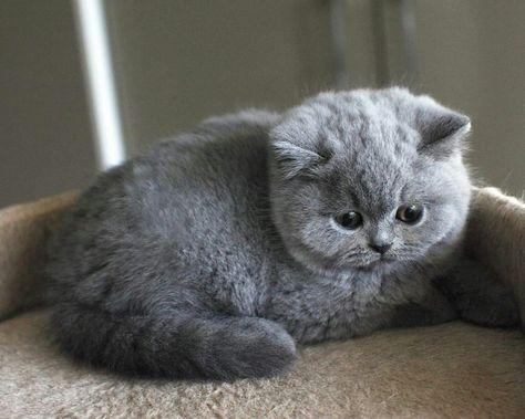 Kitten Cats Pinterest Gatti Cuccioli And Gatti Grigi