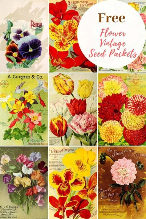 Free flower vintage seed packets to download. Frame the art work or make seed packets from the free template. Includes tutorial for seed packet planters. #seedpackets #floralart