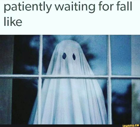 Patiently waiting for fall - iFunny :) Spooky Memes, Spooky Scary, Halloween Quotes, Halloween Town, Happy Halloween, Funny Halloween Memes, Halloween Garland, Halloween Stuff, Goth Memes