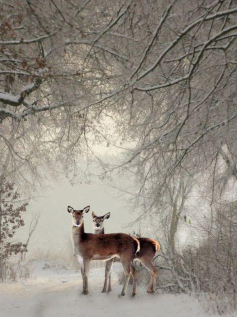 Deer automne Lodge Cabine Hunting Wood Lake Sunset Wildlife Wall Paper Border