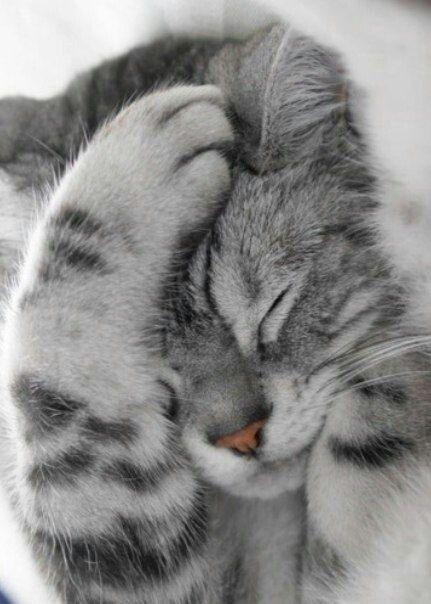 صور قطط باقة مختارة من أروع و أجمل القطط مع خلفيات Hd Cute Cats Cute Animals Kittens Cutest