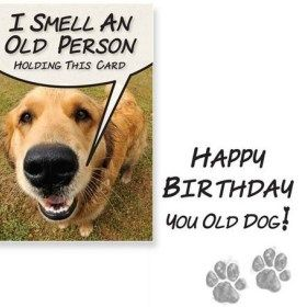 Funny Birthday Wishes For Dog Lovers Happy Birthday Dog Birthday Wishes Funny Dog Birthday