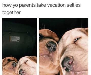 100 Pet Memes That Will Make You Lol Over And Over Again Funny Dog Memes Funny Animals Funny Pictures