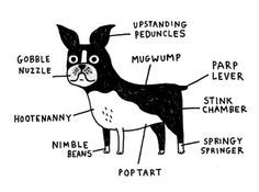 Anatomy of a Boston Terrier Dog | Terrier, Anatomy and Dog