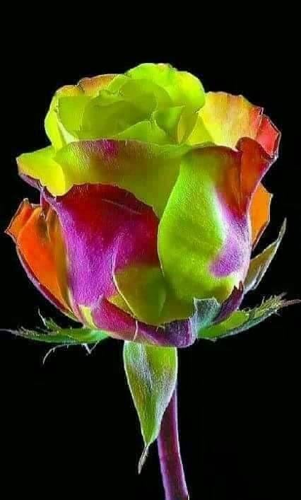 Je dédie toutes ces roses a mes abonnés aujourd'hui .pic.twitter.com/seXPmjiUL6