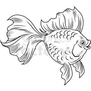 Black White Realistic Betta Fish Betta Fish Fish Clipart Art