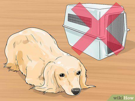 Potty Train A Dachshund Dachshund Dachshund Quotes Dog Training