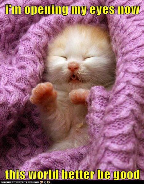 I M Opening My Eyes Now Cute Animals Kittens Cutest Newborn Kittens