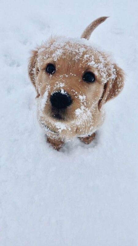 Snowy Puppy Cute Dogs Cute Puppies Baby Animals Pictures