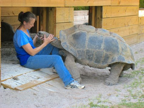 Best Turtle Turtle Images On Pinterest Tortoise Habitat - Injured tortoise gets set lego wheels help move