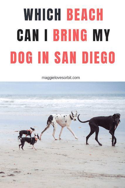Best Dog Beaches In San Diego San Diego Dog Beach Dog Beach San Diego Beach