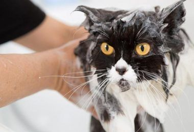 Natural Flea Bath For Dogs And Cats Flea Bath For Dogs Cat