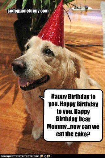 Dog Funny Birthday Quotes Dog Quotes Funny Funny Dog Pictures Happy Birthday Funny Dog