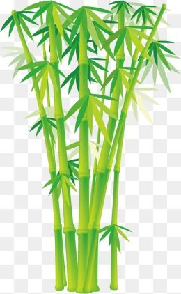 bamboo bamboo leaves plant green landscape plants cartoon cartoon vector bamboo vector bamboo art plant cartoon bamboo bamboo bamboo leaves plant green