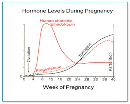 Pregnancy hormone chart hobit fullring co