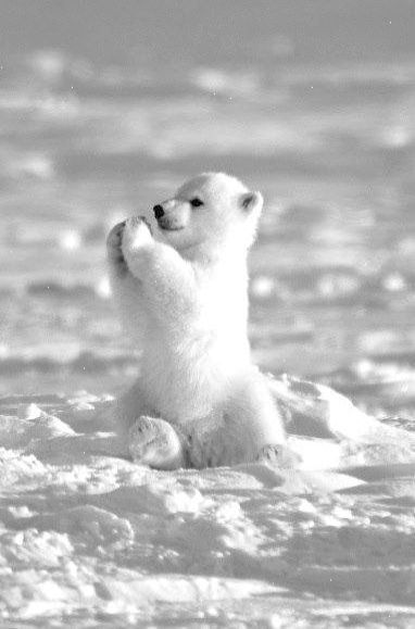 No Way Cute Baby Animals Videos Animal Facts Baby Polar Bears Cute Baby Animals