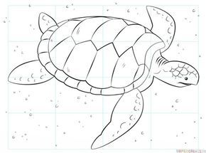 Turtle For Kids Step By Step Drawing Tutorial With Images