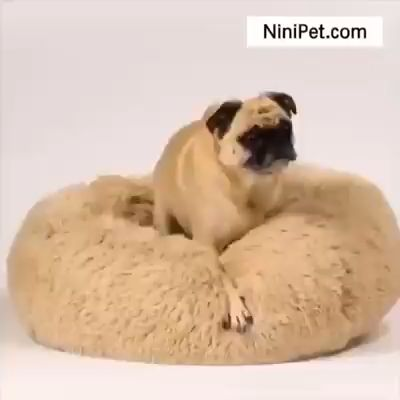 Our Calming bed can help relax and ground your fur kids