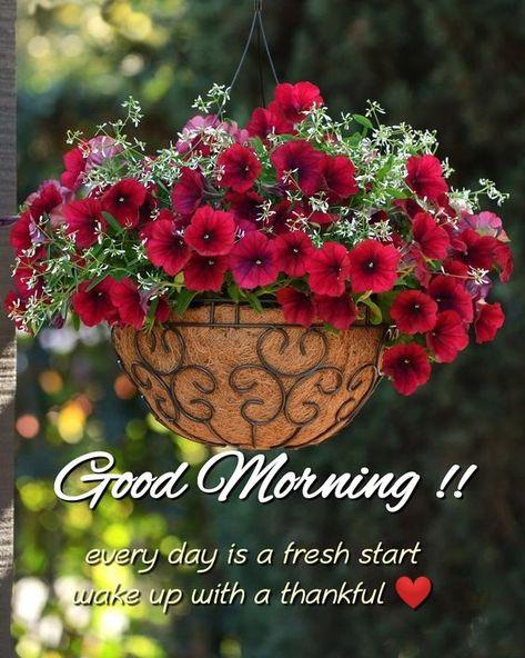 #goodmorning #flowers #goodmorning #morning #Morningquotes #Goodmorningquotes #Newdayquotes #Gooddayquotes #Motivationalquotes #Dailymotivation #Deeplifequotes #Positivethinking #Ambitionquotes #Dreamquotes #Awesomequotes #Bestquotes #Quotes #goodmorning #GoodMorningWishes