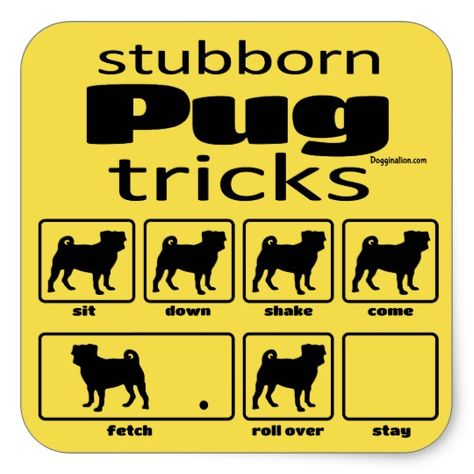 Stubborn Pug Tricks Square Sticker With Images Pugs