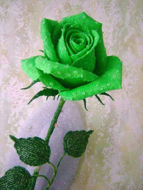 81 Ideas De Rosas Verde En 2021 Rosa Verde Rosas Flores Verdes