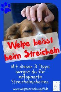 Welpe Beisst Wenn Er Gestreichelt Wird Welpen Welpenerziehung Hunde Erziehen