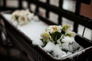 Engerlinge Die Kaferlarven Bestimmen Bekampfen Plantura In 2020 Winterharte Balkonpflanzen Balkon Pflanzen Winterhart