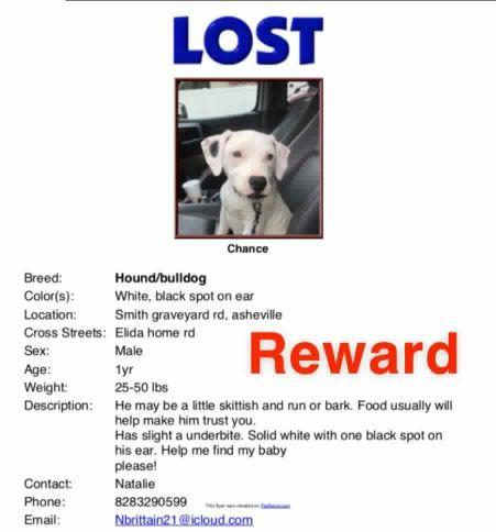 Lostdog 4 19 19 Asheville Nc Male Hound Bulldog Blackandwhite