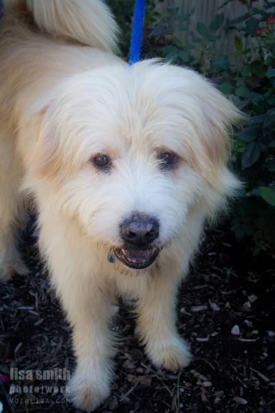 Adopt Teddy On Adoptable Pets In The Dallas Ft Worth Area Pets