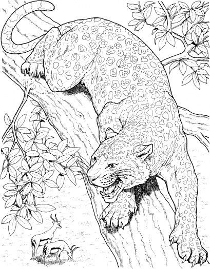 Malbuchseiten Von Baumen Malvorlagen Leopard Roars On Tree Ausmalbilder Super Farbe Church Ausmalbilder Ausmalen Ausmalbilder Bunte Zeichnungen
