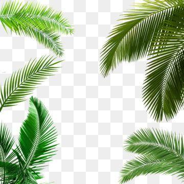 Grune Tropische Pflanzenpalmenblattgrenze Palmblatt Botanik Pflanzen Grenze Png Und Psd Datei Zum Kostenlosen Download Leaf Clipart Leaves Palm Leaves