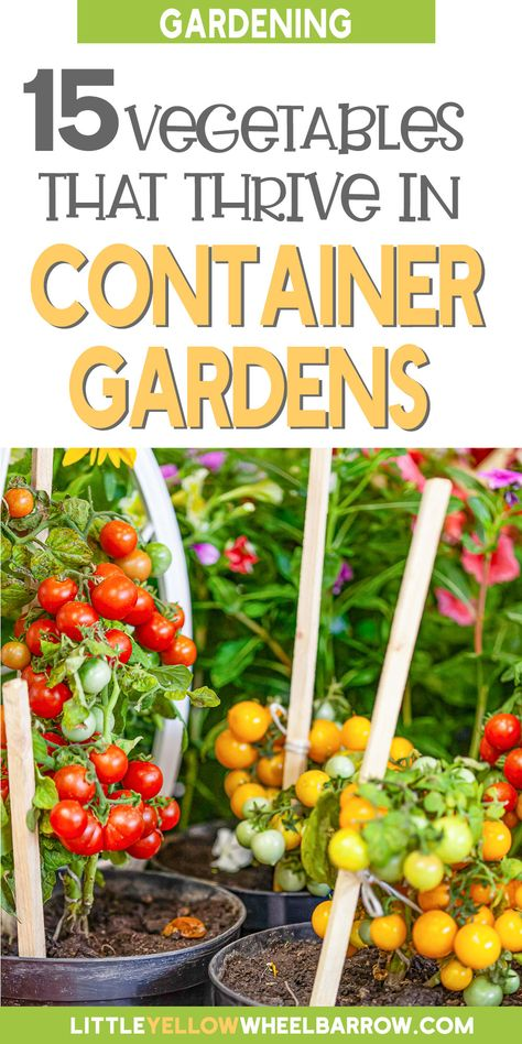 No Space for A Garden - Plant A Container Garden with These 15 No-Fuss Vegetables!