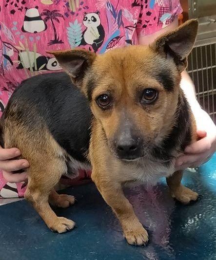 Dogs For Adoption Petfinder Dog Adoption Puppy Adoption Pet Adoption